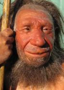 download Der Neandertaler