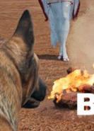 download Dog Fox Bunny