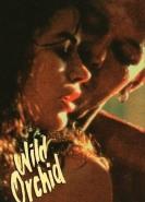 download Wilde Orchidee
