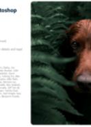 download Adobe Photoshop Lightroom v4.3 (x64)