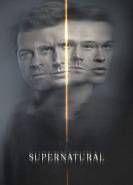 download Supernatural S14E20