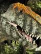 download T-Rex.Das.wahre.Biest.hinter.der.Legende.GERMAN.AC3.DOKU.1080p.HDTV.x264-DUNGHiLL