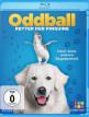 download Oddball.Retter.der.Pinguine.2015.German.DL.1080p.BluRay.x264-ENCOUNTERS