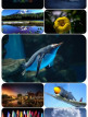download Beautiful.Mixed.Wallpapers.Pack.696
